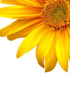 girasol: Folleto de dise�o de flores de dise�o de fondo Vectores