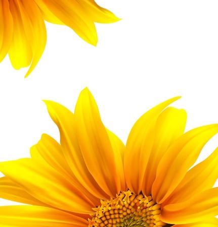 zonnebloem: Brochure lay-out bloem achtergrond ontwerp Stock Illustratie