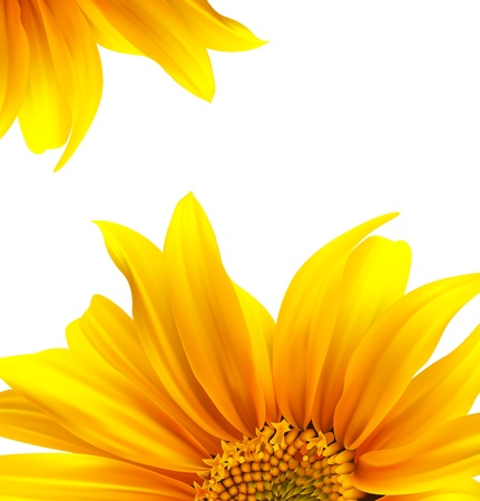 sunflower seeds: Folleto de dise�o de flores de dise�o de fondo Vectores