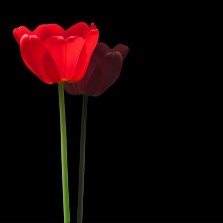 Red tulip flower vector background Vector