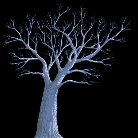 dark woods: scary background, lonely old tree at night