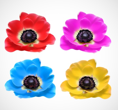 anemones: Colorful Flowers Blossom Illustration