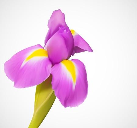 Délicate fleur exotique Illustration