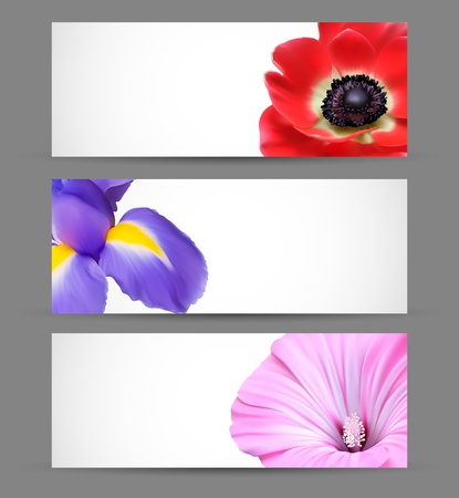 anemone flower: Spring flowers background design for banner, brochures or web headers, template layouts Illustration