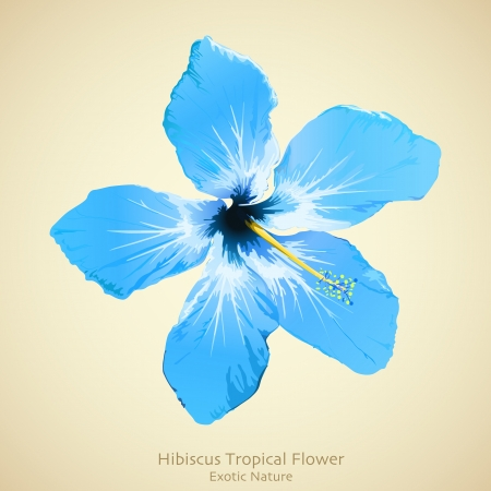 aloha: Hibiscus flower illustration. Tropical background design