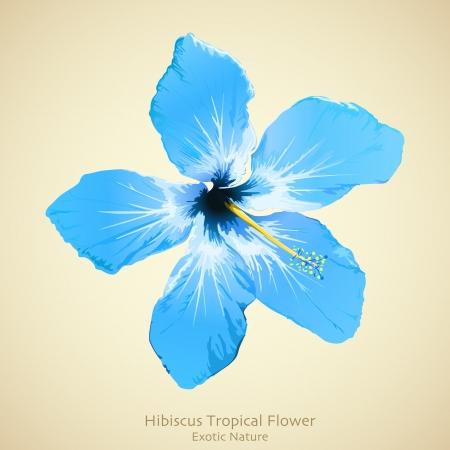 hibisco: Hibiscus ilustraci�n flor. Dise�o de fondo tropical Vectores