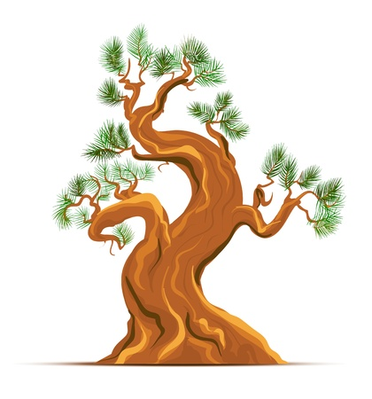 Old Pine Tree Art Vector