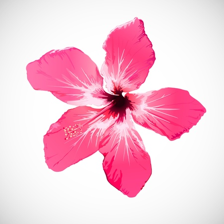 red hibiscus flower: Hibiscus Tropical Flower Art