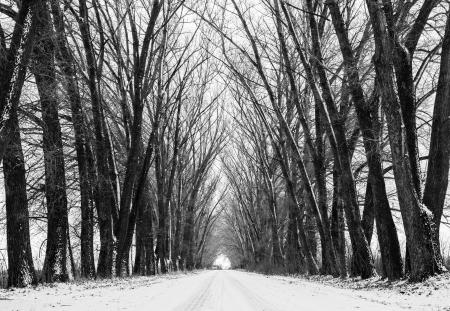 arboles blanco y negro: Un largo camino la perspectiva de invierno escénica de fondo. Grandes siluetas de los viejos árboles congelados en forma mágica. Foto de archivo