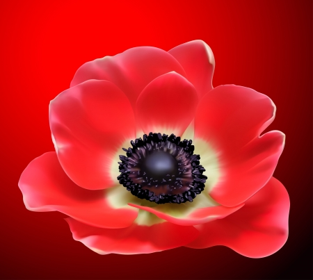 anemone flower: Red flower design. Poppy  illustration