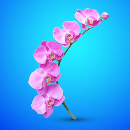 blue orchid: Orchid  flower illustration. Tropical exotic flower