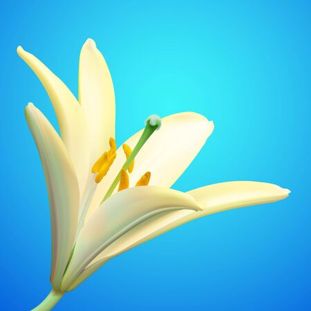 White lily flower  illustration Illustration