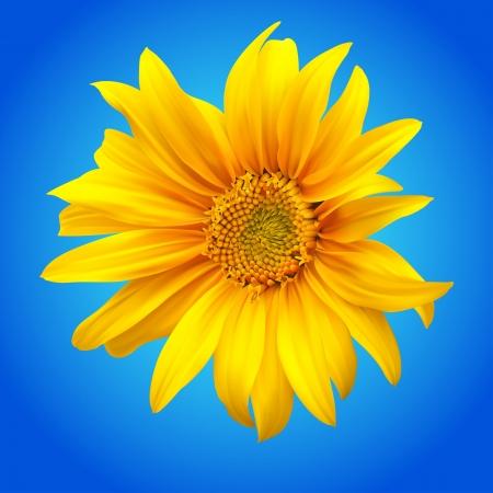 Sunflower  illustration Stock Vector - 15064379