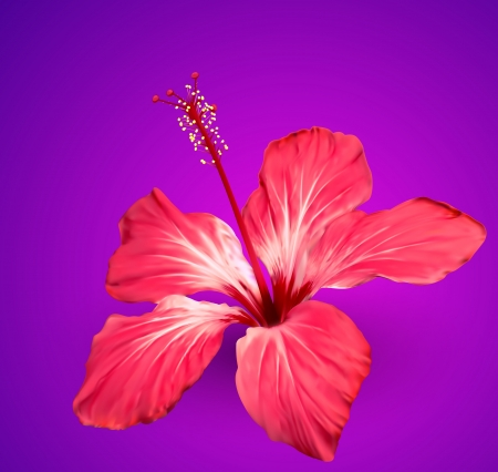 beautiful red hibiscus flower: Hibiscus tropical flower
