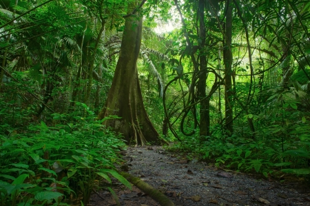 Jungle forest scenic background  Big trees and green plants mystery landscape in Thailand national park  Wild tropical nature photo