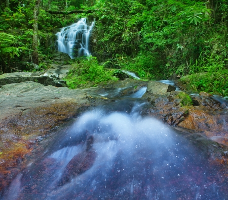 rain forest background: Mountain river in tropical rain forest in Thailand national park  Waterfall in jungle, green tropical plants and stones around