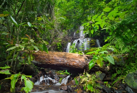Wild tropical forest  Green foliage and waterfall cascade photo