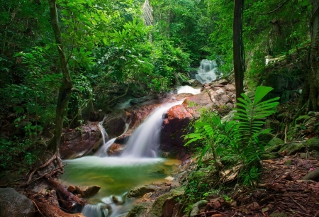 Wild jungle forest and scenery waterfall cascade with tropical plants  Nature background of Thailand evergreen national park Stok Fotoğraf