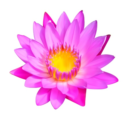 Flower icon  Water lily blossom illustration Vector