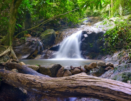 Creek in tropical forest  Beautiful landscape with trees, mossy stones and green plants  Adventure background  photo