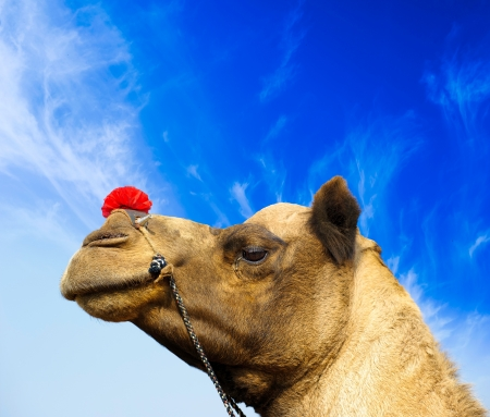 Camel animal adventure background Stock Photo - 16712904