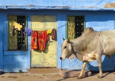 India Rajasthan Jodhpur  Blue city street life photography  Stok Fotoğraf