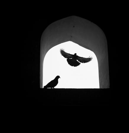 paloma blanca: Concepto de fondo, la paloma de la esperanza volando por la ventana.