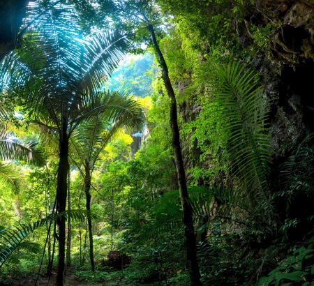 incredible: Jungle Forest