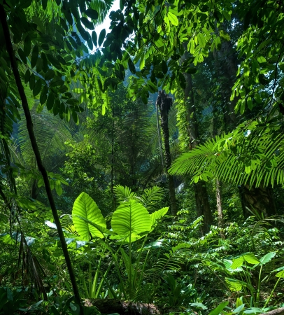 Adventure background. Green jungle forest landscape Stock Photo