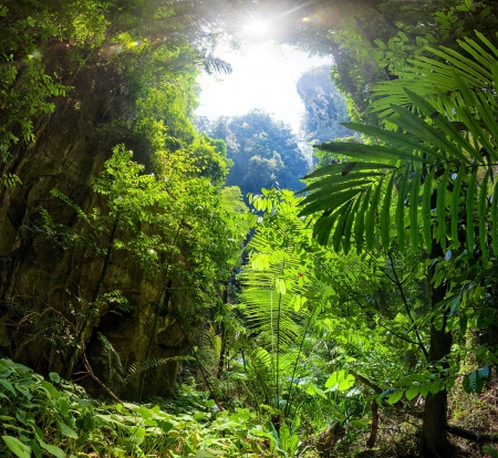 Jungle Forest