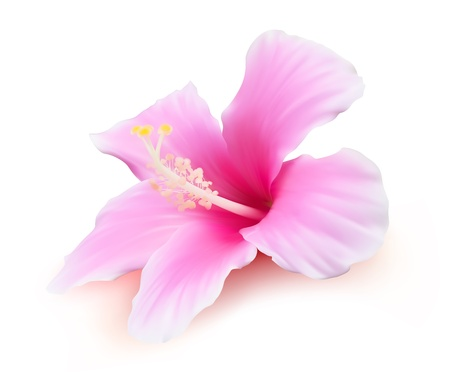 Flower vector. Hibiscus tropical plant nature illustration Vector