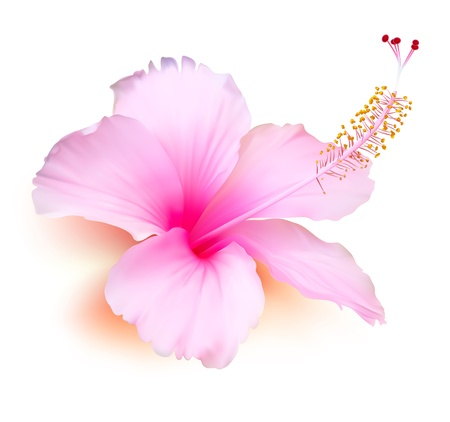 Flower . Hibiscus tropical plant nature illustration Vector