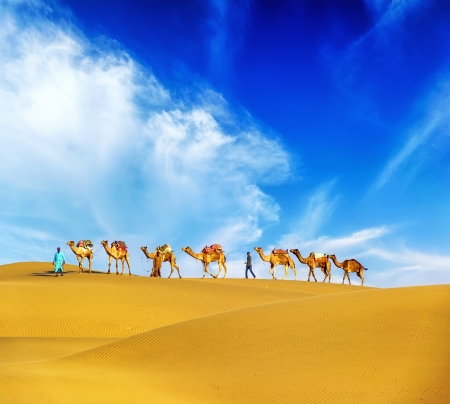 Camels  Desert landscape, adventure travel background