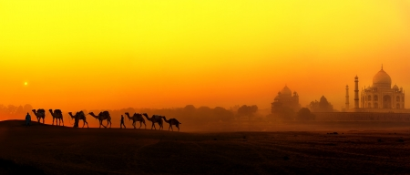 Taj Mahal Sunset view in India  Panoramic landscape with camels silhouettes and Tajmahal indian palace