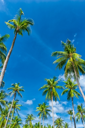 Palm trees natural background  blue sky and tropical plants Stock Photo