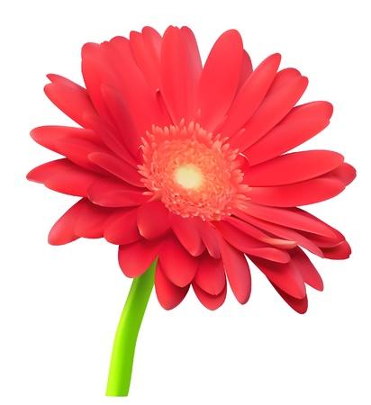 abstract gerbera flower 일러스트