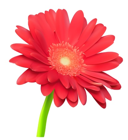 abstract gerbera flower Vector