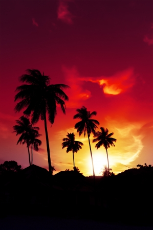 Palm tree sunset on tropical beach photo