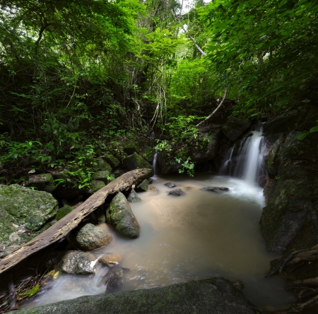 waterscape: Forest trees landscape with tropical plants, wild mountain river and waterfall cascade  Thailand jungle travel background