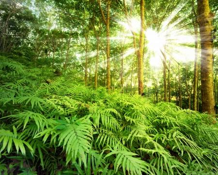 fern: Sun rays in forest
