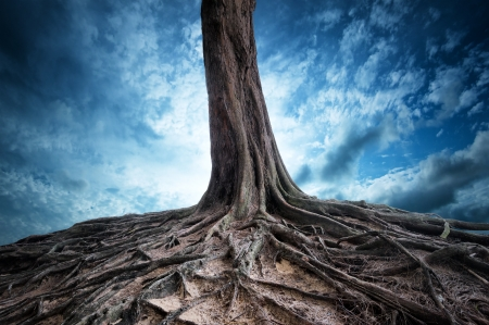 Scenic background of old tree and roots at night  Moon light magic and mystery landscape