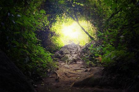 熱帯のジャングル森林道のパス方法を緑豊かな、葉、常緑の密な熱帯雨林神秘的な魔法の背景の木の自然のトンネル