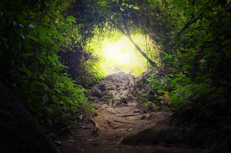 Natural tunnel in tropical jungle forest  Road path way through lush, foliage and trees of evergreen dense rain forest  Mysterious magic background