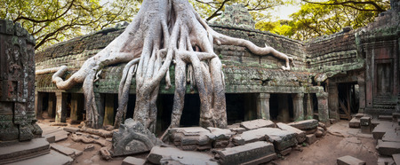 ficus: Angkor Wat Cambodia  Ta Prom Khmer ancient Buddhist temple in jungle forest  Famous landmark, place of worship and popular tourist travel destination in Asia  Stock Photo