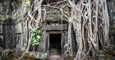 murals: Angkor Wat Cambodia. Ta Prom Khmer ancient Buddhist temple in jungle forest. Famous landmark, place of worship and popular tourist travel destination in Asia.