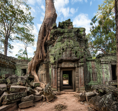 Angkor Wat Cambodia  Ta Prohm Khmer ancient Buddhist temple in jungle forest  Famous landmark, place of worship and popular tourist travel destination in Asia photo