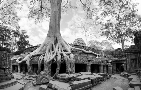 murals: Angkor Wat Cambodia  Ta Prohm Khmer ancient Buddhist temple in jungle forest  Famous landmark, place of worship and popular tourist travel destination in Asia