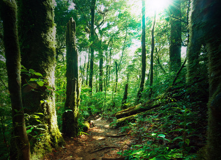 rainforest background: Deep green forest with mossy woods and ferns  Sunlight is shining through leaves and branches