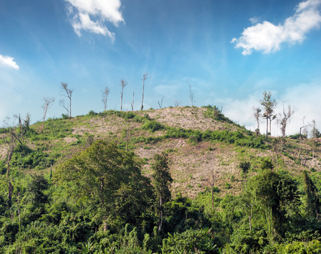 Deforestation nature background. Cut trees on hills of tropical rain forest in Laos, Asia. photo