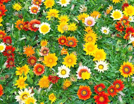 Flowers blossom background photo